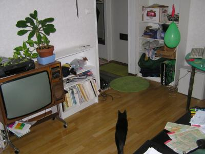 <img0*300:stuff/z/1/cats%2520and%2520more/p1010003.jpg>