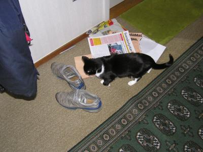 <img0*300:stuff/z/1/cats%2520and%2520more/p1010009.jpg>
