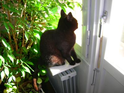 <img0*300:stuff/z/517/Cats%2520in%2520Linköping/Kali%20looking%20out%20the%20window.JPG>