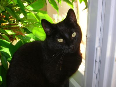 <img0*300:stuff/z/517/Cats%2520in%2520Linköping/The%20panter!.JPG>